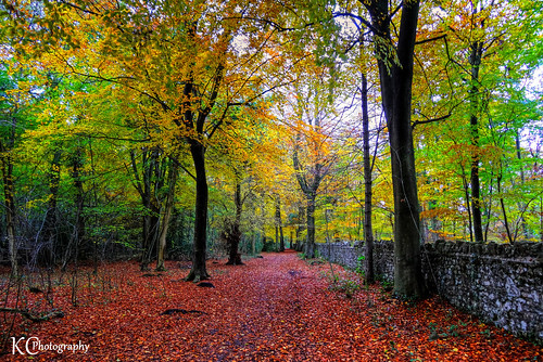trees woods forest autumn walk woodland nationaltrust forestrycommission leighwoods bristol england uk hdr sonydschx20v photomatixpro tonemapped