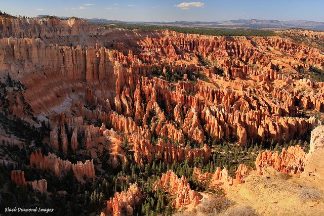 The Ampitheatre, Bryce Point, Bryce Canyon, Utah