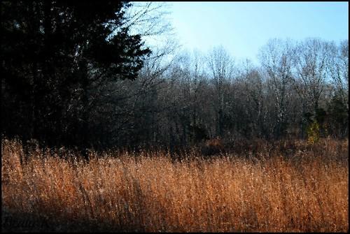 november trees sky tree nature field grass bluesky rhodeisland coventryrhodeisland georgebparkerwoodlandrefuge
