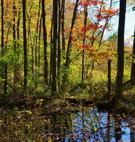 middletown autumn stitch johnjmurphyiii park connecticut middletownnaturegarden usa 06457 foliage