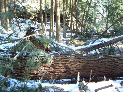 Photo of fallen trees at state park in winter