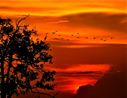 sunset nature birds paradise johor muar westmalaysia treecrane