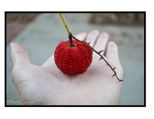 red color crimson fruit berry branch berries hand palm ruby hue grasp colorcontrast arbutusberry arbutusfruit arbutusstrawberryfruit arbutusstrawberrytree