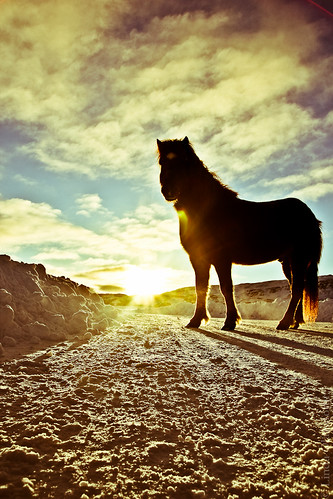 road blue sunset sky horse snow silhouette sunrise iceland sunrays countryroad eyjafjordur akureyri eyjafjörður sunflare snjór ský icelandichorse fjall fotolinda fotolind