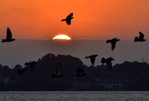 sunset sky sun water birds