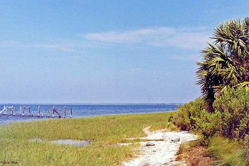 landscape scenery bay marsh waterfront palmtree stmarks florida
