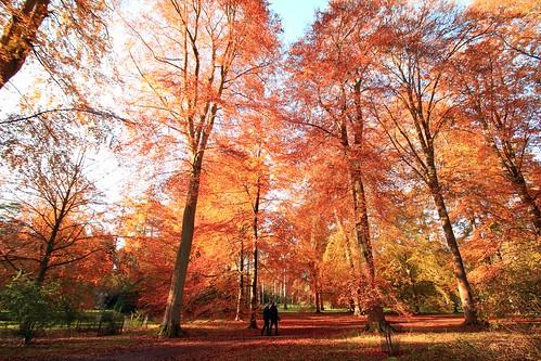 Westonbirt Arboretum | by stephendgardner