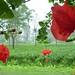 Jardin Abali, Arunachal Pradesh