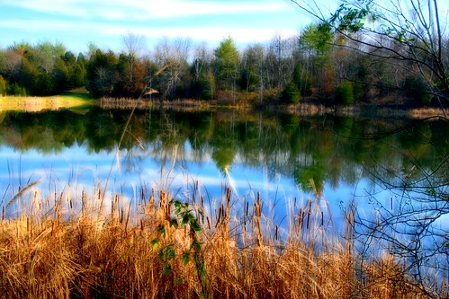 morning usa lake tree branch kentucky unitedstatesofamerica foggy sunny thesouth dixie dirtywater masondixon bigbonelickstatepark