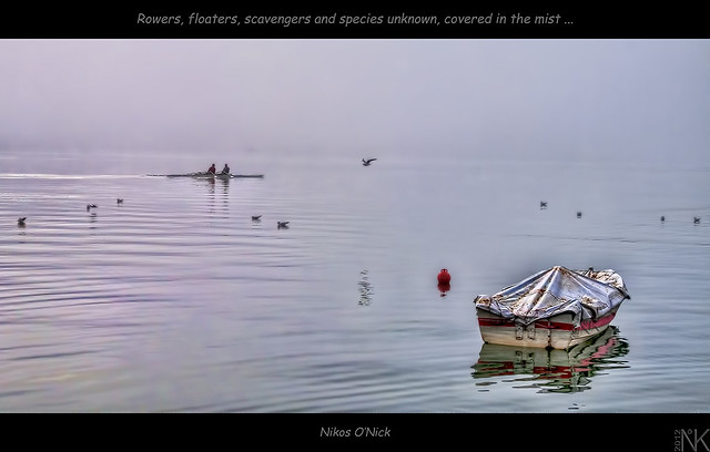 Rowers, floaters, scavengers and species unknown covered in the mist