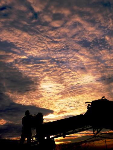 sunset sky farm alabama daphne