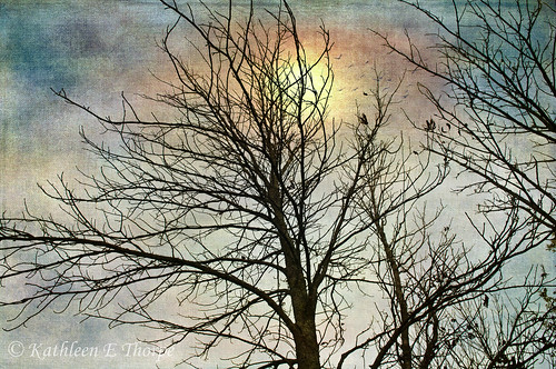 autumn mountains tree texture silhouette sunrise artistic northcarolina wolflaurel lenabemtexture