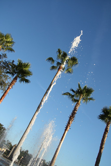Palm trees and fountain