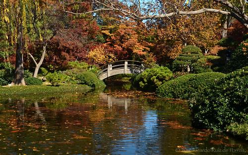 "autumn trees paisajes fish fall landscape nikon texas arboles landscaping peces colores koi otoño dfw streams ponds lagunas estanques ictus paisajismo d7000 ""japanesegardens"" ""northtexas"" ""nikond7000"" ""texastowns"" ""ictusphotography"" ""ricardoruizdeporras"" ""dallasfortworth"" ""dfwmetroplex"" ""texaslandscape"" ""botanicgardens"" ""fortworthbotanicgardens"" ""fishponds"" ""jardinesbotanicos"" ""jardinesjaponeses"""