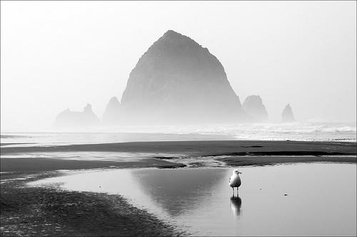 haystack rock seagull | by loop_oh