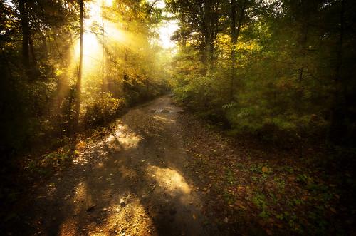 road morning sun nature forest sunrise ma golden path walk massachusetts dirt rays freetown assonet freetownstateforest