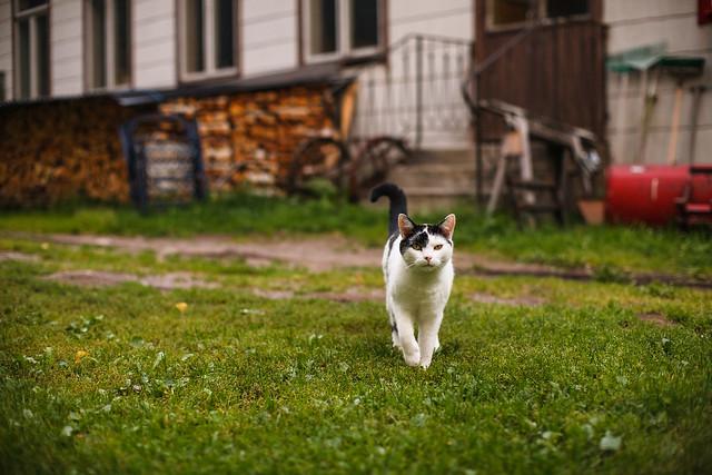 Suspicious cat is... suspicious?
