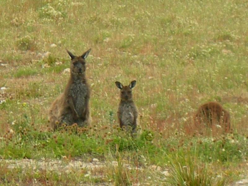VIAGGI: AUSTRALIA 2012 - 249