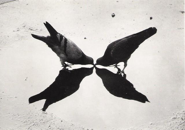 Haas, Ernst (1921-1986) - 1949 Trafalgar Square Pigeons, London
