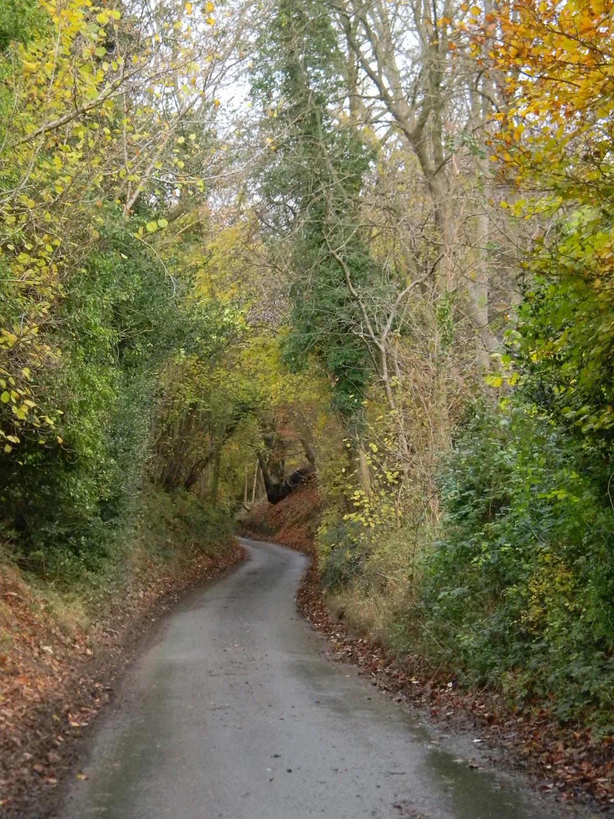 road Henley Circlular via Hambleden (short)
