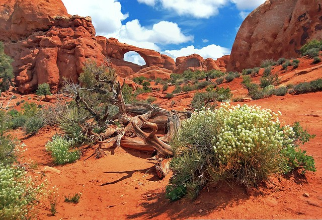 Spring at Skyline Arch