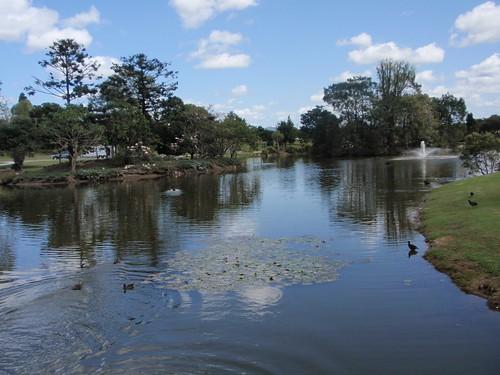 park lake water birds lakeside gympie lakealford lakealfordpark