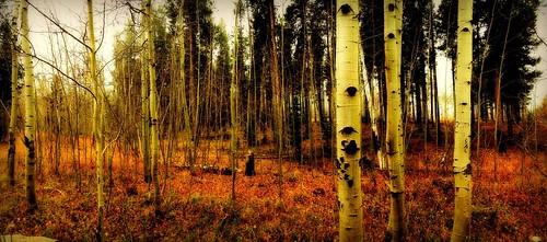 autumn aspens wyoming autumnal picmonkey