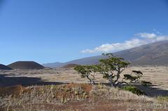 Mauna Kea from Puʻu Huluhulu (DSC_4552) taken on 2012-11-01T15:14:23-08:00 by thtbln
