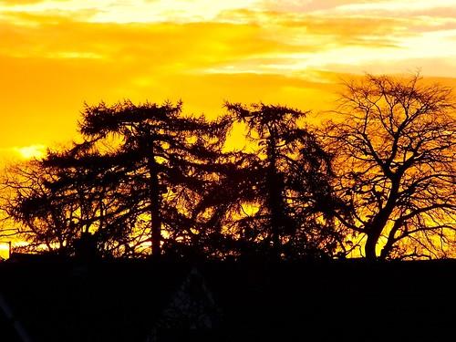trees sky colour nature sunrise garden