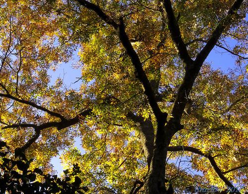 orange fall leaves canon foliage sx50