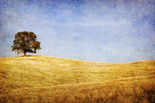 california ca sky usa tree texture grass clouds hills oaktree lonetree fiddletown blueandgold