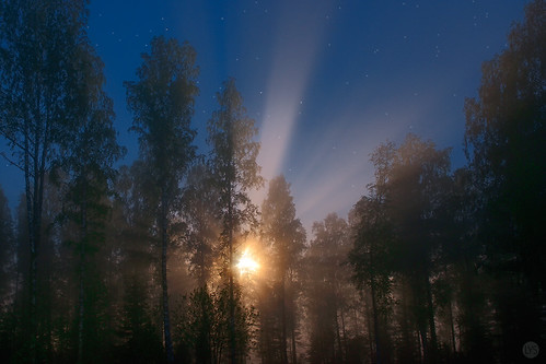magic in the moonlight | by Sandra Bartocha
