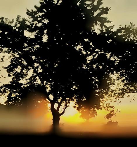 silhouette sunset tranquility beautyinnature tranquilscene landscape nature sun tree foggymorning sunrise samsunggalaxys5