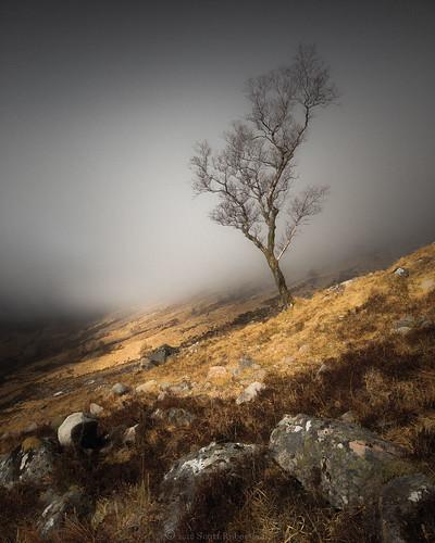 glennevis bennevis rivernevis scotspine steallgorge fortwilliam lochaber scottishhighlands scotland winter ice snow hail wind cold nikond810 1635mmf4 leefilters trees pine log