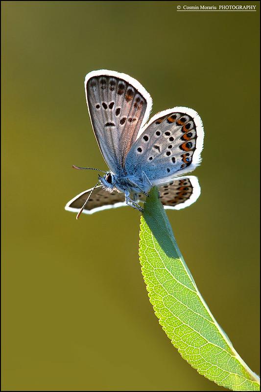 Butterfly,11-04280