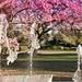 LA Arboretum Fall 2012