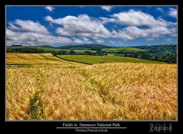 Fields in  Dartmoor National Park