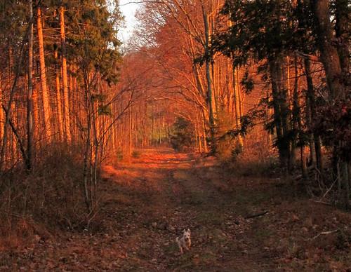 dog dogs nature sunrise landscape fallcolor fallcolors orwigsburgpennsylvania