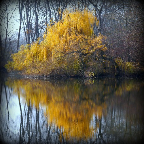 --- November Golden Reflection --- | by Rosa Dik 009 -- catching up !