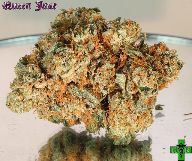 Queen Jane Reseda Medical Marijuana