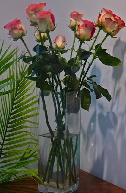 Ecuador-Roses