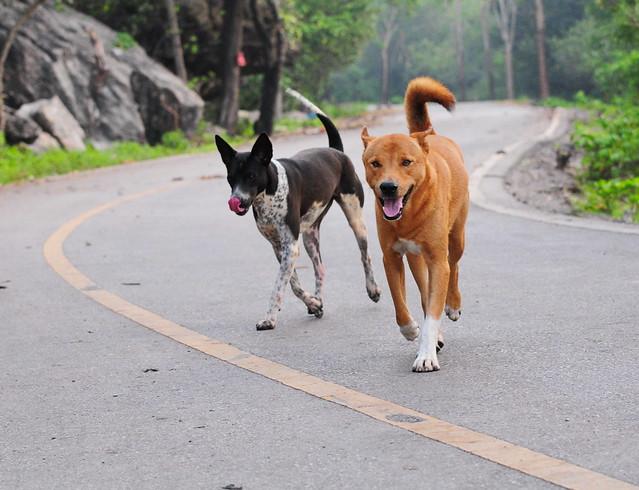 ,, 2 Happy Dogs ,,