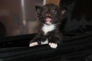 It's Still Kitten Season! Cats and Kittens at Crafty Cat Rescue (Ann Arbor, Michigan) - Wednesday July 18th, 2018 | by cseeman