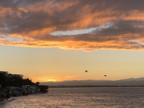 sunrise añasco rincon puertorico brownpelicans nature caribbeansea caribbean