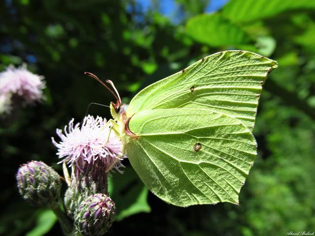 Butterfly 1696