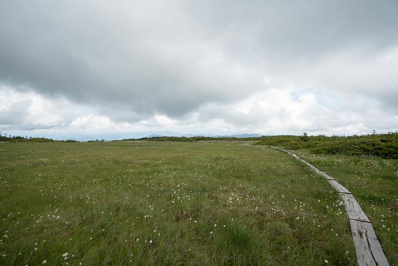 曇天の高層湿原