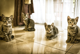 Four little tabbies! 😸😺😽🐱 | by stratman² (Joey's finally home)