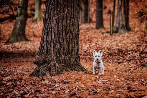 statepark dog ny newyork photoshop canon eos woods bokeh upstate adobe cs6 moreaulake 60d canonef100mmf2usm sdny topazadjust samanthadecker