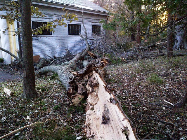 Tree cleanup begins