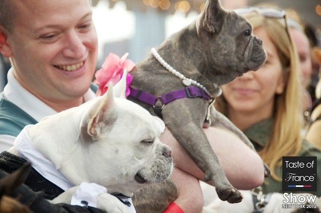 French Bulldog Show